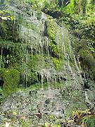 Ferns drip water, near Horseshoe Falls and Matai Falls, Catlins, Southland, New Zealand; Oct 2012