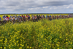 October 8, 2017 - Tours, France - TOURS, FRANCE - OCTOBER 8 : Illustration picture of the peloton during the 111th edition of the Paris-Tours cycling race with start in Brou and finish in Tours on October 08, 2017 in Tours, France, 8/10/2017 (Credit Image: © Panoramic via ZUMA Press)
