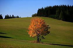 CZECH REPUBLIC VYSOCINA NEDVEZI OCT12 - Autumn landscape near the village of Nedvezi, Vysocina, Czech Republic.....jre/Photo by Jiri Rezac....© Jiri Rezac 2012