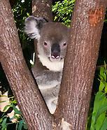 Australia Critters & Cairns