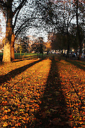 Long autumn shadows from London plane trees in Parsons Green, south-west London