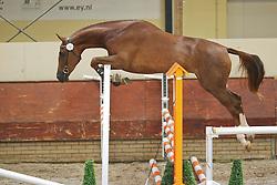 Babs Imoo<br /> KWPN Paardendagen 2009<br /> © Hippo Foto - Leanjo de Koster