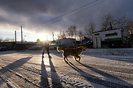 A girl walks down a street in Nenana, Alaska as a neighborhood dogs walks nearby