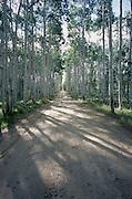 Dirt road running through the woods