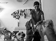 Sara Moran is surrounded by some of her dogs at the Milagros Perrunos shelter in Lima, Peru.