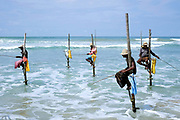 "Stick fishermen otherwise known as stilt fisherman fishing in the Indian Ocean on 17 April 2016 in Sri Lanka. Stilt fishing is a method of fishing unique to Sri Lanka, located off the coast of India in the Indian Ocean. The fishermen sit on a cross bar called a petta tied to a vertical pole and driven into the sand a few meters offshore. From this high position, the fishermen casts his line, and waits until a fish comes along to be caught. Although the approach looks primitive and ancient, stilt fishing is actually a recent tradition believed to have started during World War II when food shortages and overcrowded fishing spots prompted some men to try fishing on the water. Today, many fishermen rent their stilts to ""actors"" who pose as fishermen for photographers and tourists."