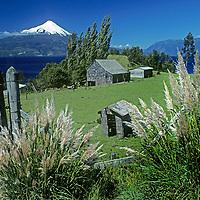 CHILE,Lakes District. Estancia (ranch) beside Lake Llanquihue. Mt.Osorno bkg. Pampas grass fgnd.