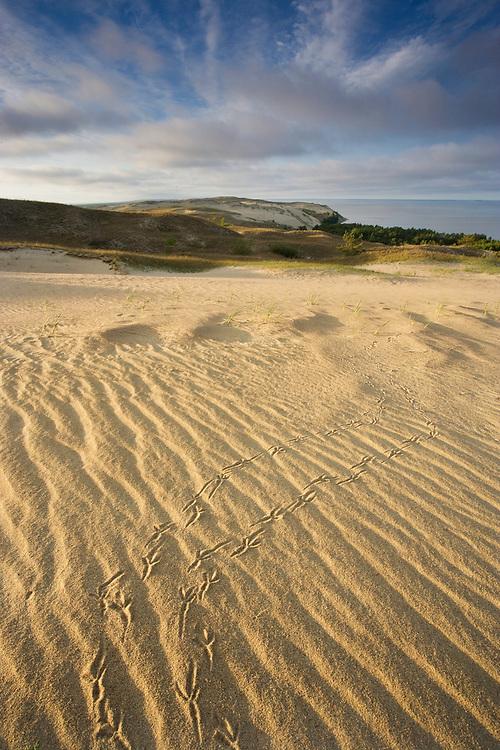 Sand dunes & bird footprints on Agilos Kopa, Nagliai Nature Reserve, Curonian Spit, Lithuania. Lithuania. Mission: Curonian Spit, Lithuania, June 2009.