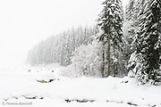 The snow storm moved across Keechelus Lake covering the trees in white.  This created an abstract setting.