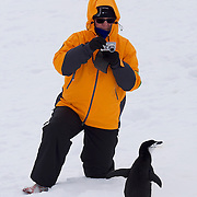A Seabourn Guest photographs Chinstrap Penguin on Half Moon Island, Antarctica.