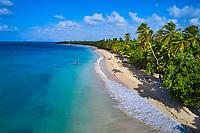 France, Martinique, Sainte-Anne, la plage des Salines avec des cocotiers // France, West Indies, Martinique, Sainte-Anne, the Salines beach with coconut palms