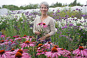 """Rachel picking flowers at her farm 'Green and Gorgeous' <br /><br />Rachel is the owner of """"Green and Gorgeous"""" Flower Farm in Oxfordshire. She is well known for the flower arranging courses she offers. Her flower farm also caters for events, weddings and private picking<br /><br />British local flowers, grown nearby, count for around 10% of the UK market, traveling less than a tenth of their foreign counterparts which are often flown in from abroad. Nearly 90% of the flowers sold in the UK are actually imported, and many travel over 3000 miles. Local flower farms help biodiversity, providing food and habitat to a huge variety of wildlife, insects including butterflies, bugs, and bees. Often local flower farmers prefer to grow organic rather than using pesticides. British flowers bloom all the year around, even in the depths of winter, and there are local flower farms throughout the country.<br /><br />Many people like the idea of the just picked from the garden look, and come to flower farms throughout Britain to pick their own for weddings, parties and garden fetes. Others come for the joy of a day out in the countryside with their family. Often a bride and her family will come to pick the flowers for her own wedding, some even plant the seeds earlier in the year."""