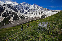 Russia, Caucasus, hikers, Mount Donguzorun and mountains plants.
