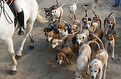 © Licensed to London News Pictures. 10/03/2012..Cleveland, England..The Cleveland Hunt sets out from Thrushwood Farm on Teesside with the hounds leading the way...Photo credit : Ian Forsyth/LNP