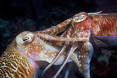 Cephalopods: Cuttlefish, Octopus, Squid, Nautilus