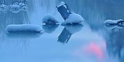 Stumps reflected in Vermillion Lakes at dawn, Banff National Park, Alberta, Canada