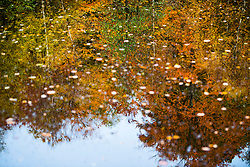 © Licensed to London News Pictures. 22/10/2020. Burnham, UK. Autmnal colours reflected in a pond at Burnham Beeches national park and National Nature Reserve in Buckinghamshire, south East England. Photo credit: Ben Cawthra/LNP