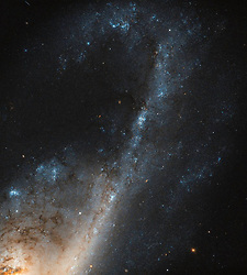 Despite all efforts galaxy formation and evolution are still far from being fully understood. Fortunately, the conditions we see within certain galaxies — such as so-called starburst galaxies — can tell us a lot about how they have evolved over time. Starburst galaxies contain a region (or many regions) where stars are forming at such a breakneck rate that the galaxy is eating up its gas supply faster than it can be replenished! NGC 4536 is such a galaxy, captured here in beautiful detail by the Hubble's Wide Field Camera 3 (WFC3). Located roughly 50 million light-years away in the constellation of Virgo (The Virgin), it is a hub of extreme star formation. There are several different factors that can lead to such an ideal environment in which stars can form at such a rapid rate. Crucially, there has to be a sufficiently massive supply of gas. This might be acquired in a number of ways — for example by passing very close to another galaxy, in a full-blown galactic collision, or as a result of some event that forces lots of gas into a relatively small space. Star formation leaves a few tell-tale fingerprints, so astronomers can tell where stars have been born. We know that starburst regions are rich in gas. Young stars in these extreme environments often live fast and die young, burning extremely hot and exhausting their gas supplies fairly quickly. These stars also emit huge amounts of intense ultraviolet light, which blasts the electrons off any atoms of hydrogen lurking nearby (a process called ionisation), leaving behind clouds of ionised hydrogen (known in astronomer-speak as HII regions).