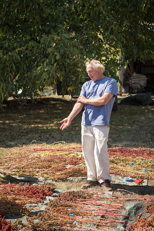 Frank Morton owner and seed breeder at Wild Garden Seed farm in Philomath, OR.