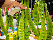 """15 JUNE 2105 - NARATHIWAT, NARATHIWAT, THAILAND:  """"Stink"""" beans for sale in the market in Narathiwat. They have a sharp flavor and are frequently served with shrimp.      PHOTO BY JACK KURTZ     Parkia speciosa (petai, bitter bean, twisted cluster bean, stinker or stink bean)"""