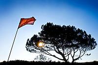 ZANDVOORT - De golfbaan van de Kennemer Golfclub, waar ook in 2008 het Dutch Open voor mannen zal worden gehouden. Op de foto: De boom op C3 Copyright Koen Suyk