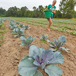Farmhand Emily Chiara pulls weeds in a field of vegetables at the Crimson and Clover Farm in Northampton, Massachusetts.