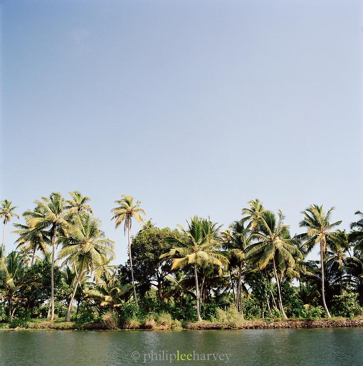 Palm tress along the Kerala backwaters, Kerala, India