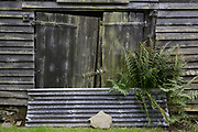 Clapboard barn and fern growing with corrugated iron, on 10th September 2018, near Lingen, Herefordshire, England UK.