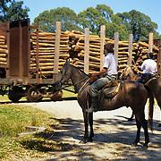 South America, Uruguay, Florida, Mounted Gaichos wait at a railroad crossing.
