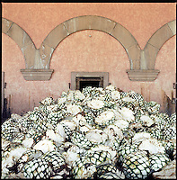 Large piles of agave fruit awaiting drying in ovens at the Herradura House in Jalisco, Mexico.