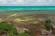 Central Caye<br /> Banco Chinchorro, <br /> Offshore Atoll<br /> Yucatan Peninsula<br /> Mexico<br /> Central America