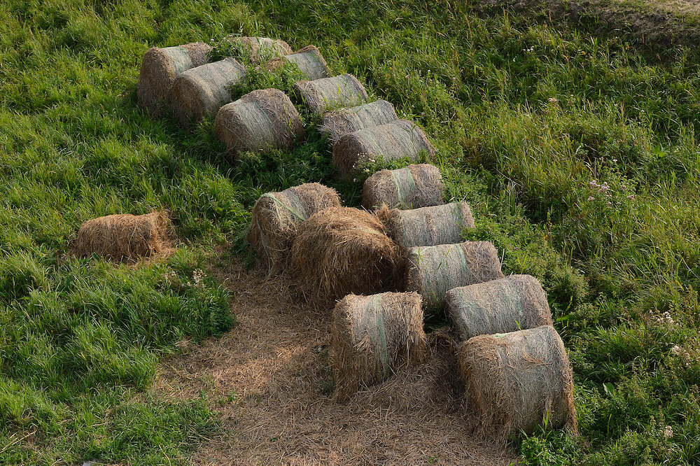 """Rotting hay, harvested only for EU subsidies in the in the private reserve """"Odra Delta Natury Park, owned by Dr Rabski, near Kopice, Poland, Oder river delta/Odra river rewilding area, Stettiner Haff, on the border between Germany and Poland"""