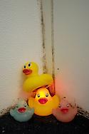 Rubber duckies in a moldy bathtub.