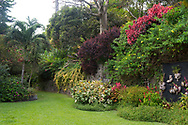 A profusion of multicoloured, tropical plants growing on a wall in the Tower Garden, St. Paul's, Grenada, the Caribbean, West Indies