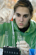 Liberty High School student Caitlin Baker tests water from the Neversink River in Hasbrouck on Nov. 8, 2006.