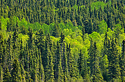 Boreal forest at Trail Lake in spring<br />Ear Falls<br />Ontario<br />Canada
