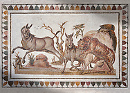 Picture of a Roman mosaics design depicting a lion attacking two onagers or Asiatic wild ass, from the ancient Roman city of Thysdrus. 3rd century AD. El Djem Archaeological Museum, El Djem, Tunisia..   Wall art print by Photographer Paul E Williams If you prefer visit our World Gallery Print Shop To buy a selection of our prints and framed prints desptached  with a 30-day money-back guarantee and is dispatched from 16 high quality photo art printers based around the world. ( not all photos in this archive are available in this shop) https://funkystock.photoshelter.com/p/world-print-gallery .<br /> <br /> USEFUL LINKS:<br /> Visit our other HISTORIC AND ANCIENT ART COLLECTIONS for more photos to buy as wall art prints  https://funkystock.photoshelter.com/gallery-collection/Ancient-Historic-Art-Photo-Wall-Art-Prints-by-Photographer-Paul-E-Williams/C00002uapXzaCx7Y
