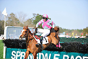 27 March 2010 : Things almost go badly for DANCING SKY as his jockey struggles to stay aboard over the last hurdle in the Sport of Queens Maiden Hurdle race.