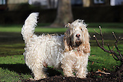 A shaggy dog stops to enjoy the sunshine (breed tbc!)