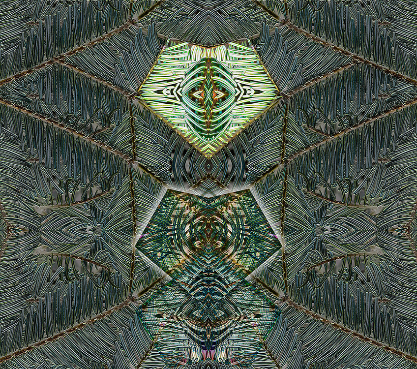 """Tribal Counsel"", derivative image from a photo of fir needles, November, Clallam County, Olympic Peninsula, Washington, USA"