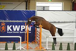 070 - Gouvernante VDL<br /> Vrijspringen 3 jarige merries<br /> KWPN Paardendagen - Ermelo 2014<br /> © Dirk Caremans