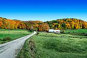 Idyllic autumn farm, Reading, Vermont, USA.