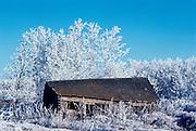 Homestead in hoarfrost<br /> Stony Plain<br /> Alberta<br /> Canada