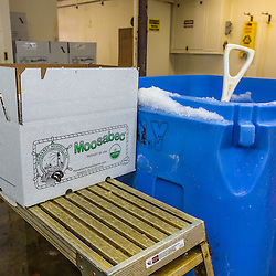 A bin of ice next to a box of mussels at Moosabec Mussels in Jonesport, Maine.