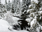 NW Winter Landscape