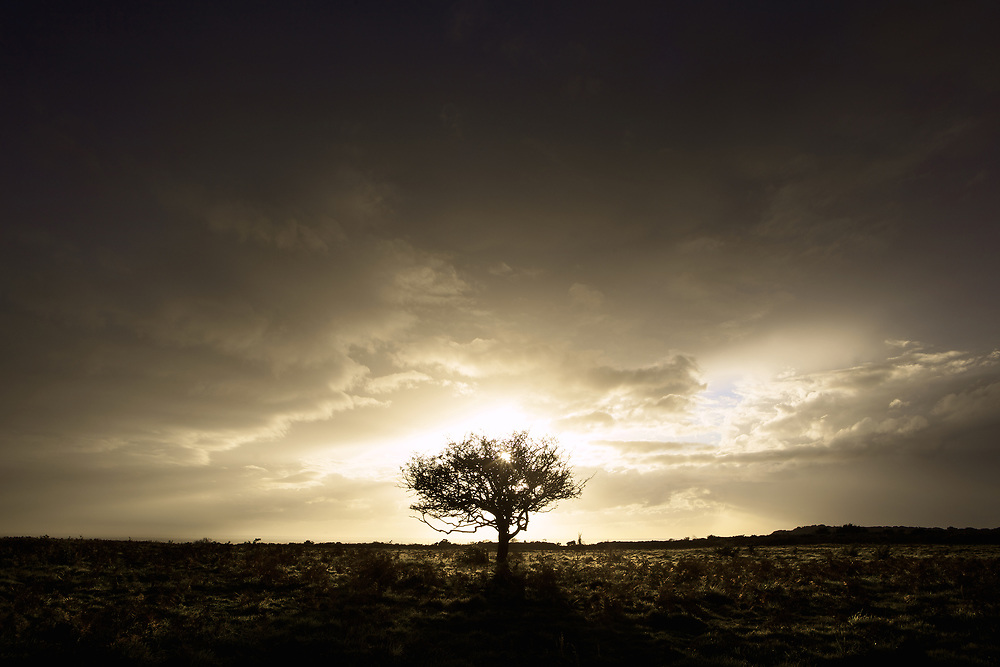 Tree silhouetted at sunset against a moody sky at Noirmont, St Brelade, Jersey, Channel Islands