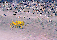 Pakistan, Northwest Frontier Province, 2004. The NWFP is considered mountainous desert, and can be cultivated successfully only with the help of irrigation.
