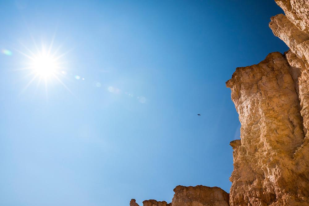 Raven, sun and blue sky. Bryce Canyon National Park, Utah, USA.