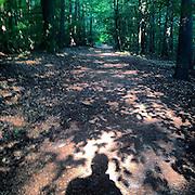 Taunus. #latergram #taunus #forest #germany #light #shadow #oberursel #deutschland #green #trees #path