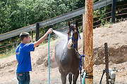 young male teen Rinsing down a horse after the Israeli Equestrian Organization western style Reining competition